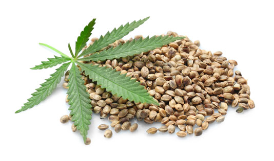 Why Do You Need Best Cannabis seeds? Get The Info Here