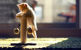 Know That Is Your Accurate Cat Scratching Post To Your Own Bud