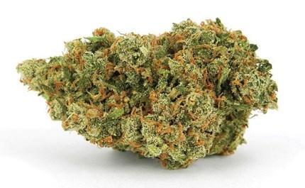 How can you procure marijuana seeds?